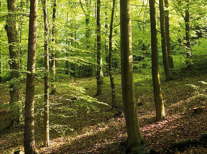 Le développement durable et l'impact environnemental sont au coeur des préoccupations d'HABA